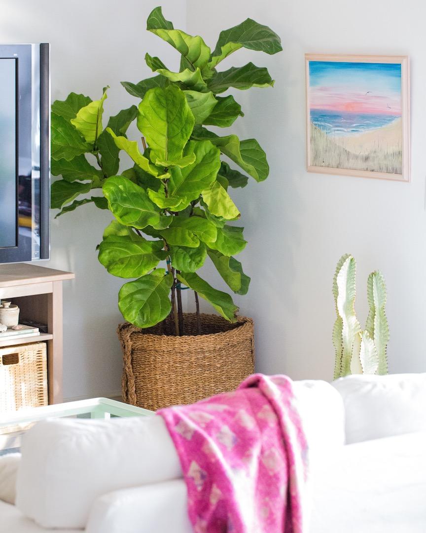 Our top 6 picks for modern indoor houseplants dalla vita