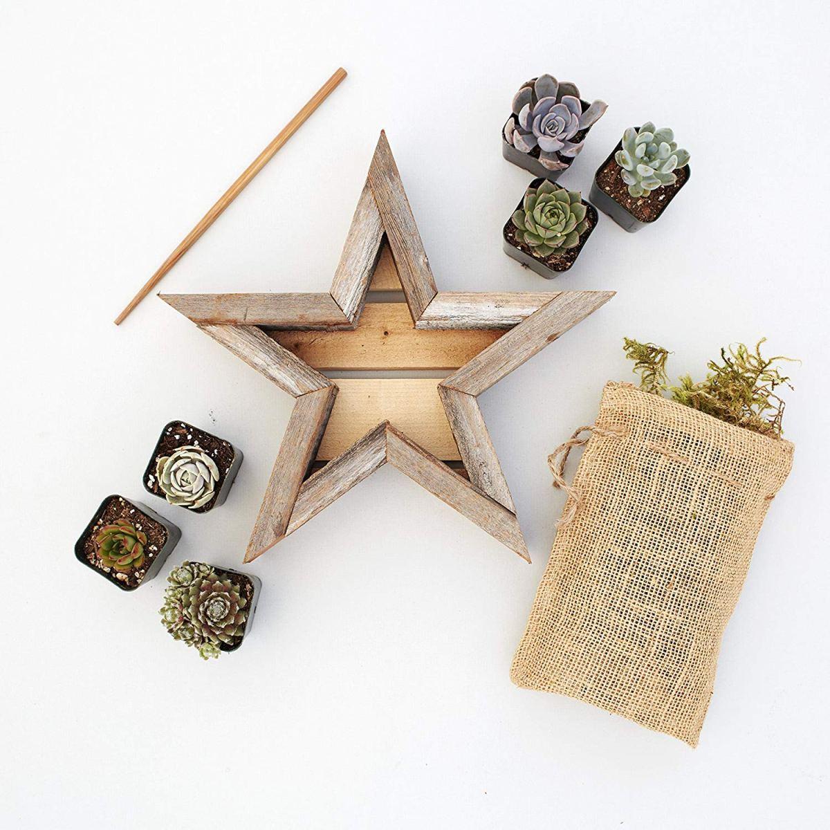 Vertical Succulent Garden Star