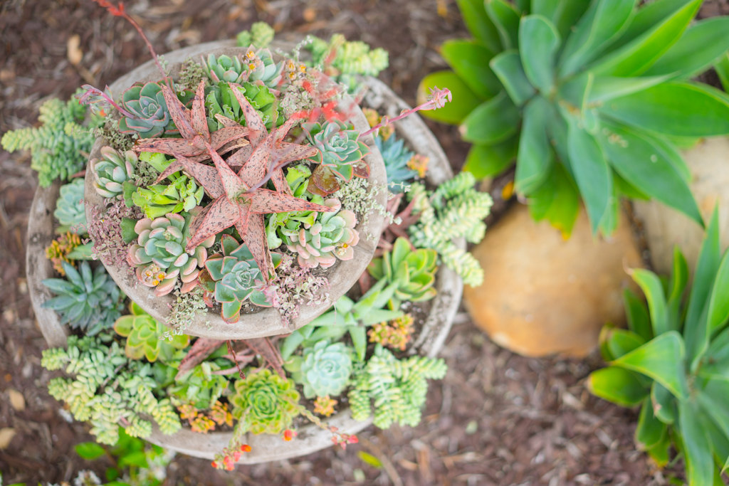 Succulent Water Fountain
