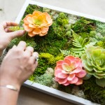 How to Make a Moss Garden - Dalla Vita