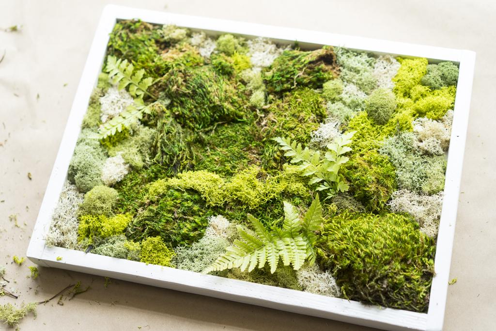 Mini Moss Garden Dalla Vita