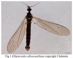 Photo of wetland cranefly