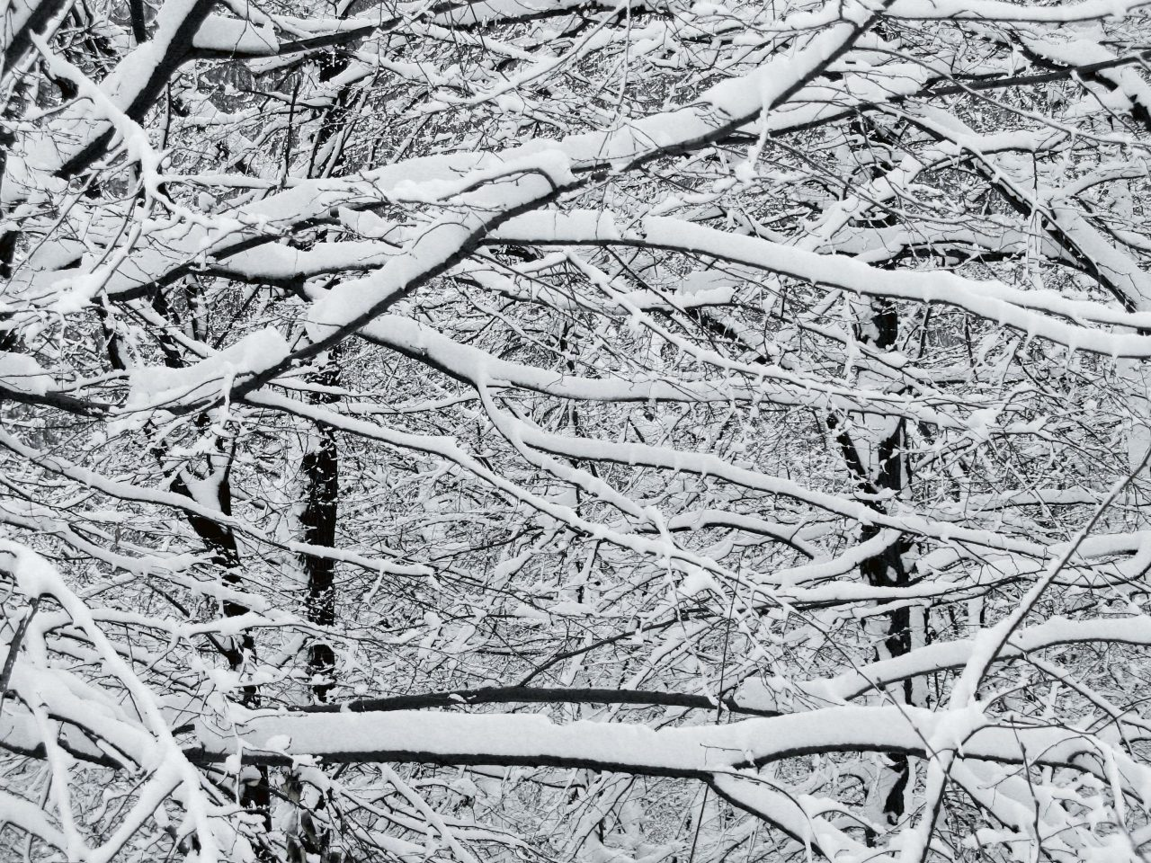Picture of a forrest with snow and a lot of branches everywhere