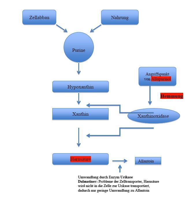 Übersicht Purinstoffwechsel