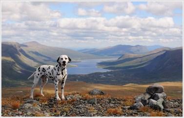Casper i jotunheimen (foto: Nina Hedvig Eriksen)