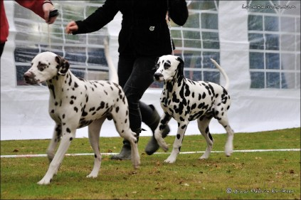 DalmatianDelights016NHEriksen