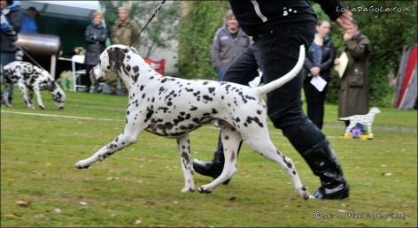 DalmatianDelights047NHEriksen