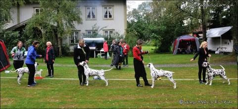 DalmatianDelights060NHEriksen