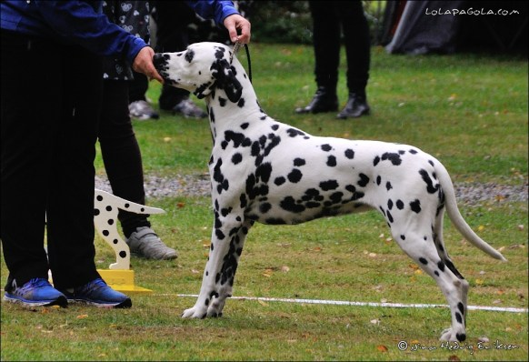 DalmatianDelights121NHEriksen