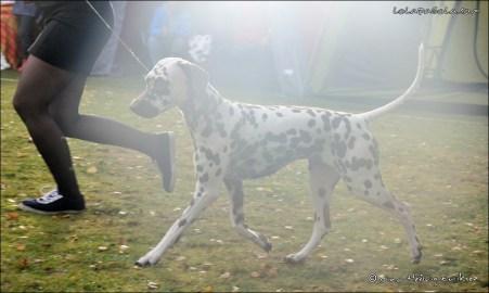 DalmatianDelights161NHEriksen