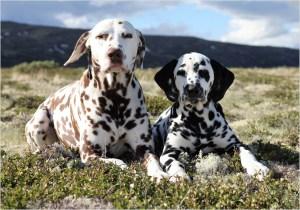 Eddy og Tilly (Fotograf Wibeke Van Megen)