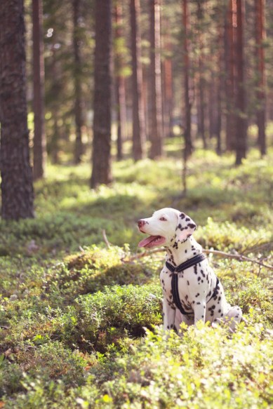 Edi (Midleton's Eligible Elmer) Foto: Silje-Marie Roos