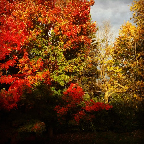 leaves-in-back-yard