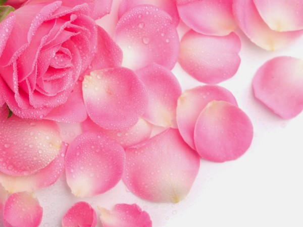 A Bouquet of Kosmea Roses: Rosehip Oil, Hydrating Rosewater Mist and Rose Body Lotion