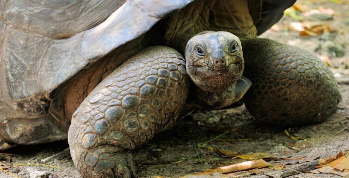 Muere Alagba, la tortuga gigante más longeva de África - National  Geographic en Español