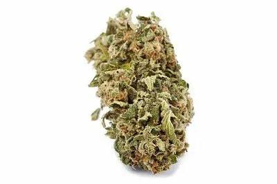 牙买加十速大麻(Jamaican Tenspeed)