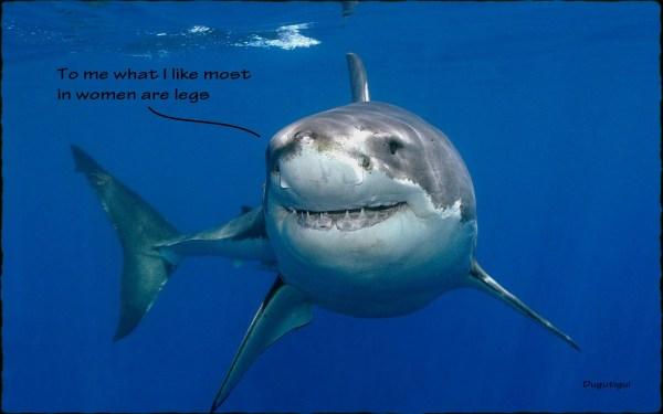 sharks life ii en graphic humor Damantiguis Blog