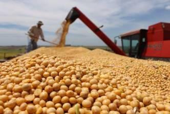 النظام يطرح مناقصة لاستيراد 50 ألف طن من الذرة وفول الصويا