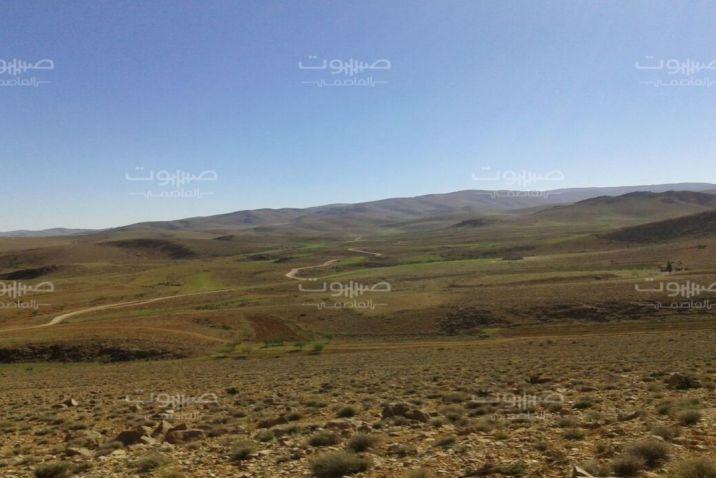 بعد اختطاف أصحابها.. حزب الله يسطو على المواشي في القلمون الغربي