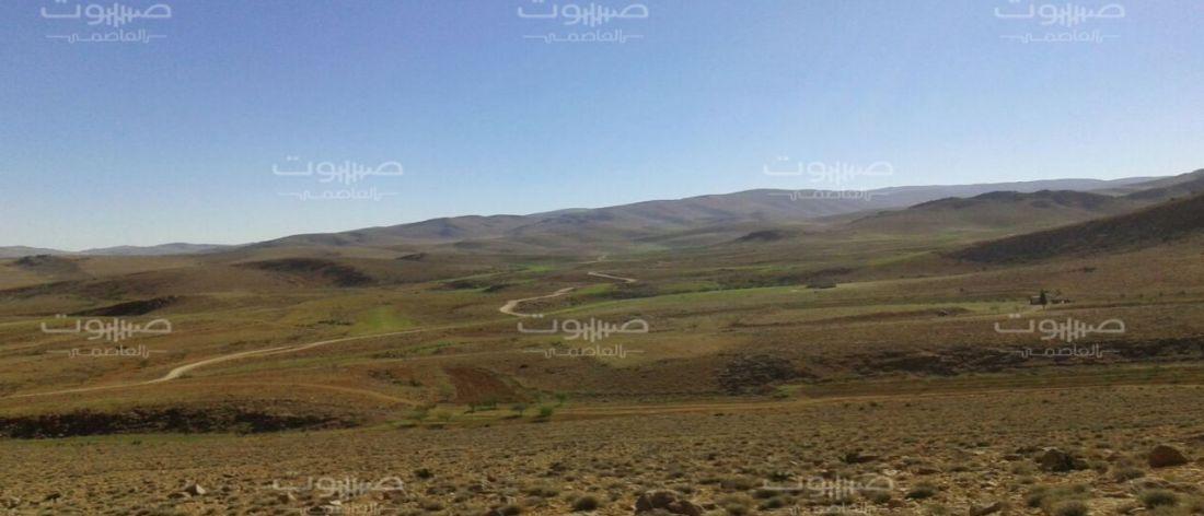 عبر جرود القلمون.. ميلشيا حزب الله مستمرة في تهريب مخدراتها إلى سوريا