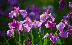 Best Iris in UAE