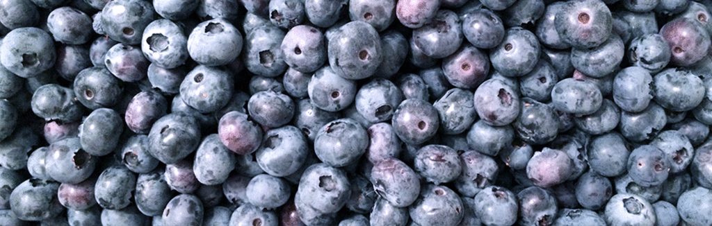 Dambly's blueberries grown with Organic gardening supplies