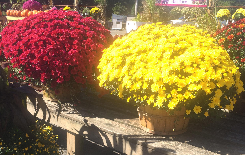 Fall Perennials for Your Garden Dambly s Garden Center