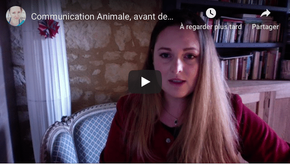 communication animale conseil Dame-Cande