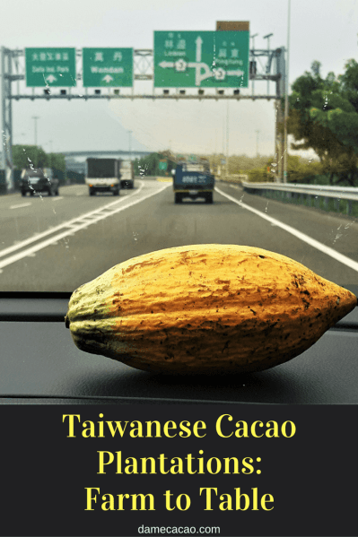 Taiwanese Cacao Plantations West Coast of Taiwan