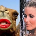 Hot Lips or Horse Lips?