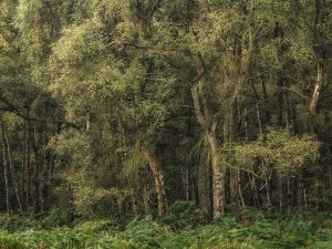 Ashridge Chiltern Woodland Landscape Photography