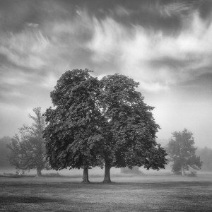 Landscape Photography of some Misty Trees