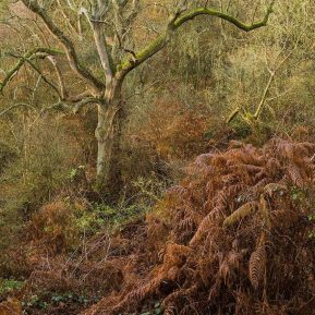tree Shotover Country Park Landscape Photography