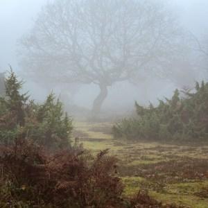 Burnham Beeches Landscape Photography