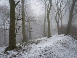 Chiltern Woodland snow