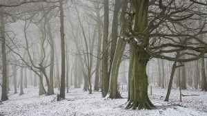 Chiltern Woodland snow