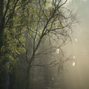 Mist, Light and Cobwebs
