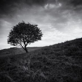 Pitstone Hill Landscape Photography
