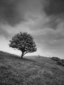 Landscape Photography of Pitstone Hill Buckinghamshire