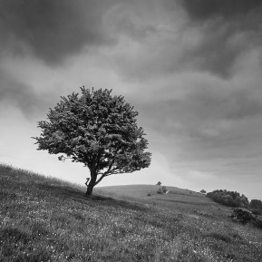 Landscape Photography of Pitstone Hill Buckinghamshire