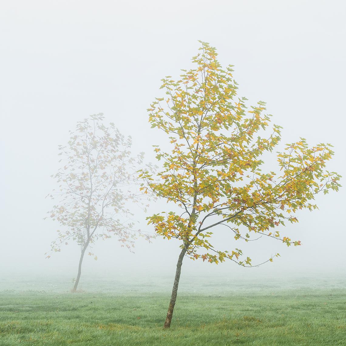 Landscape Photography of misty trees