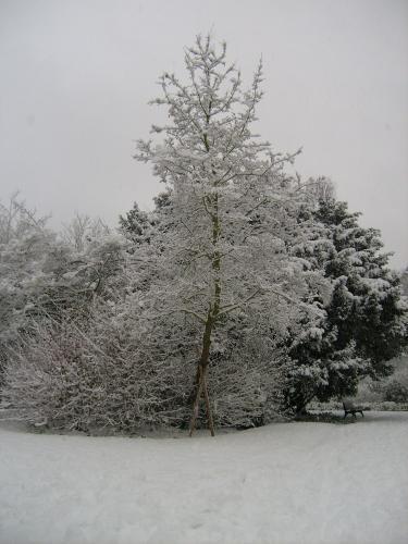 Neige recouvrant un arbre