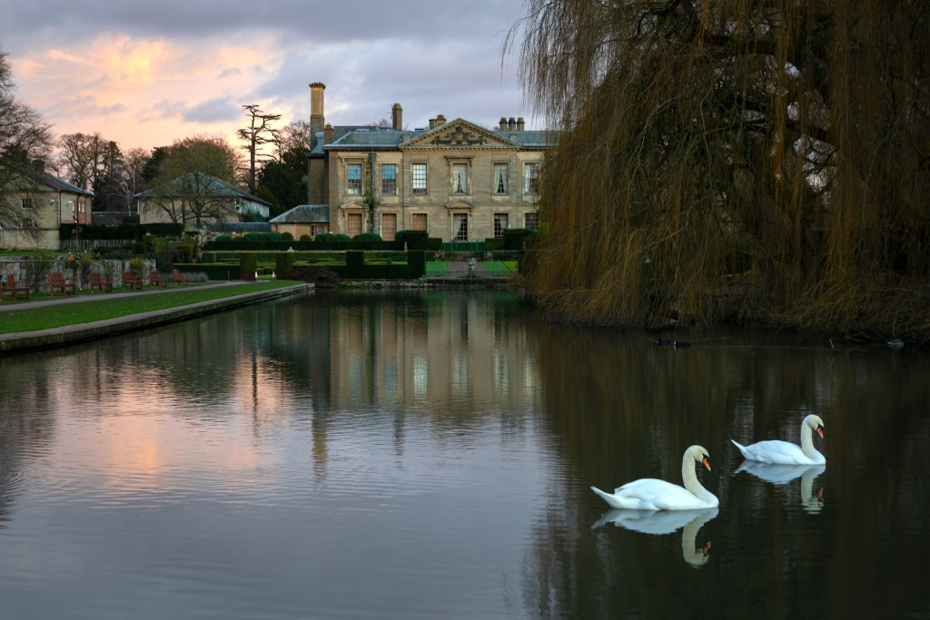 Two swans in the top pool