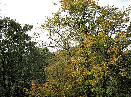 Bunte Blätter in Glasgow