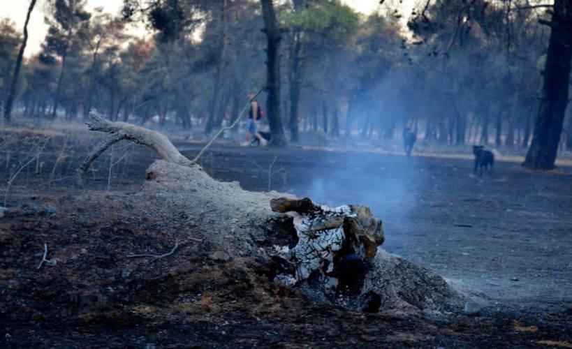 Da bi se šuma obnovila poslije požara, potrebno je 70 godina