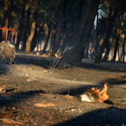 Za paljenje šume šest mjeseci do 12 godina zatvora