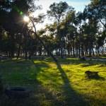 Uz alepski bor, u parku na Ćemovskom će rasti i lovor, lipe, košćele…