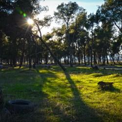 Uz alepski bor, u parku na Ćemovskom će rasti i lovor, lipe, košćele...