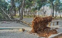 Vjetar oborio dvadesetak stabala u parku