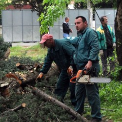 """Sječa na gradilištu """"Zetagradnje"""", Foto: Luka Zeković (Vijesti)"""
